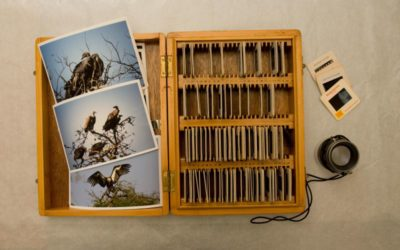 Extinct? 48 deg C, Public Eco Art Project, N Delhi 2008