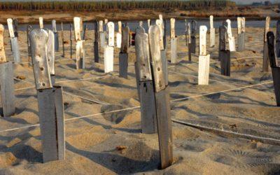 Riverbank Installations I, II, III 2007