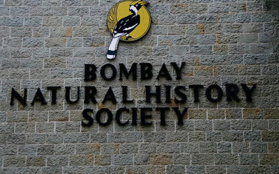 1993: Bombay Natural History Society photo exhibition
